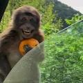 Ini monyet
