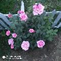 Shrouk Elsayed