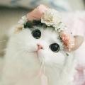 Kyut Cat