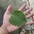 E. NYGMA