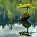 tiếng vọng thiên nhiên