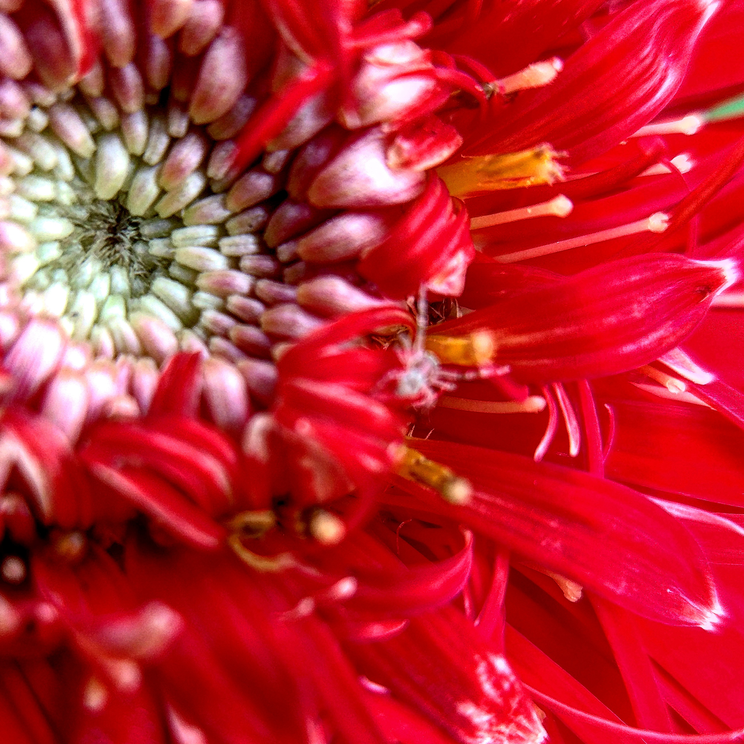Macro Photography with Apexel 25mm lens and Mi 5 [Part 3]