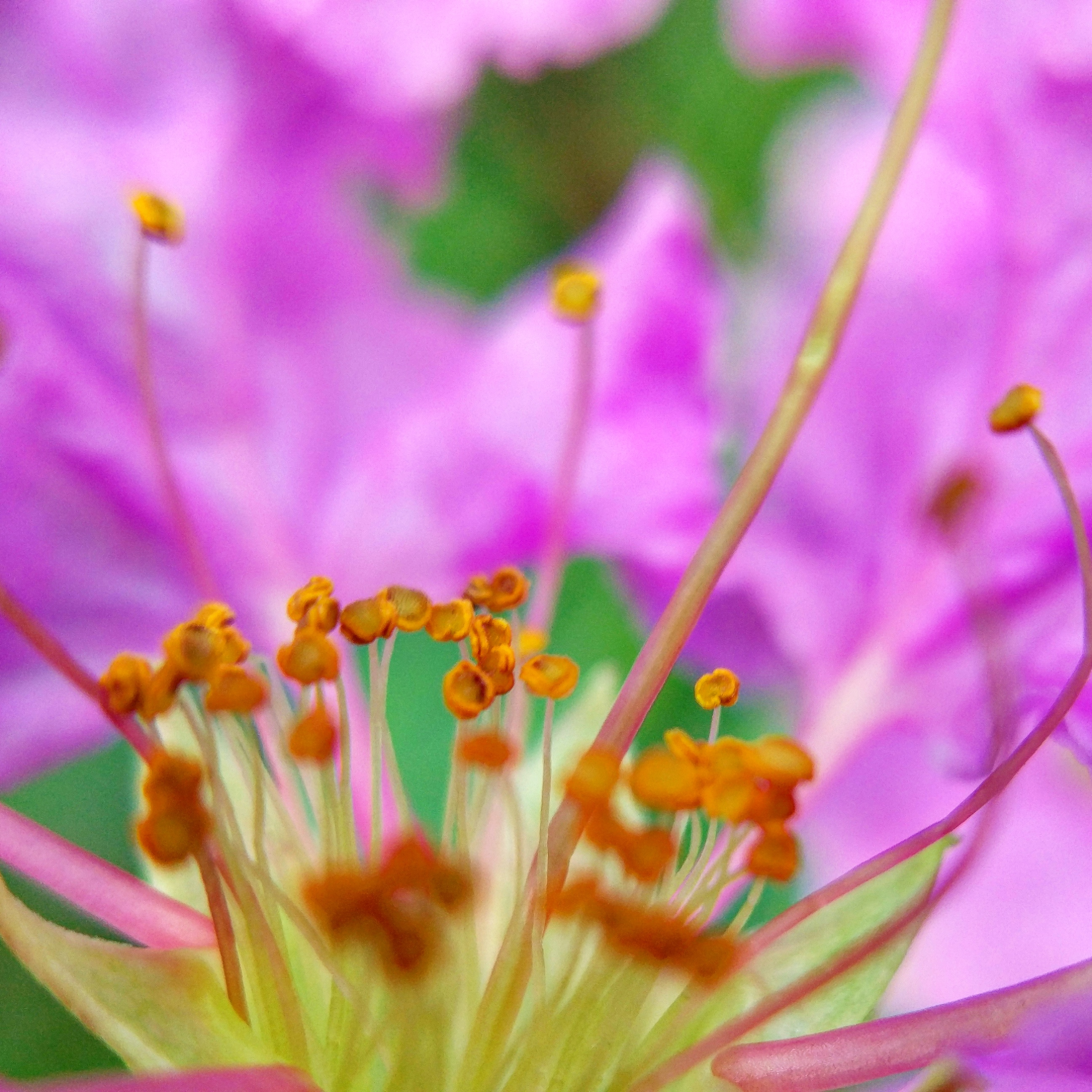 Macro Photography with Apexel 25mm lens and Mi 5 [Part 4]