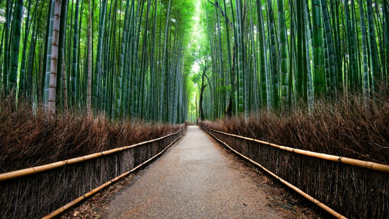 Rt Bamboo Forest Japan Wallpapers Hd Resources Mi Community
