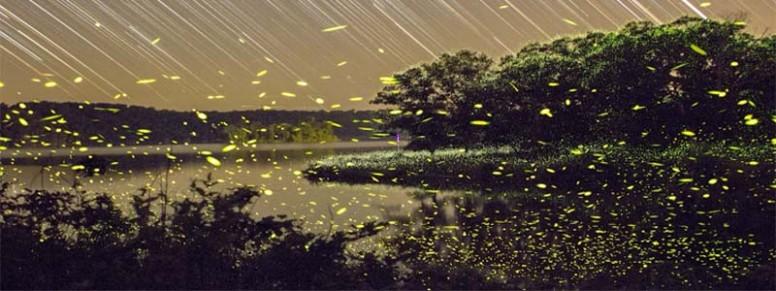 purushwadi-fireflies-festival.jpg