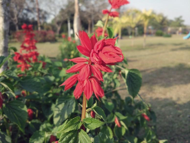Shot of a flower