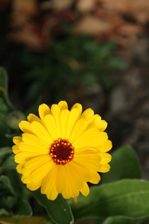 Flower_at_1600_ISO_for_comparison.JPG