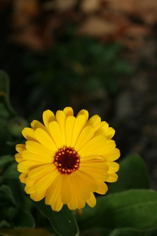 Flower_at_100_ISO_for_comparison.JPG