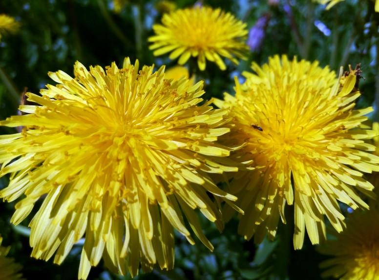 Учимся правильно и красиво фотографировать цветы
