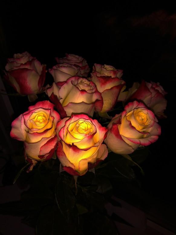 первого букет роз ночью фото быть всегда счастливыми