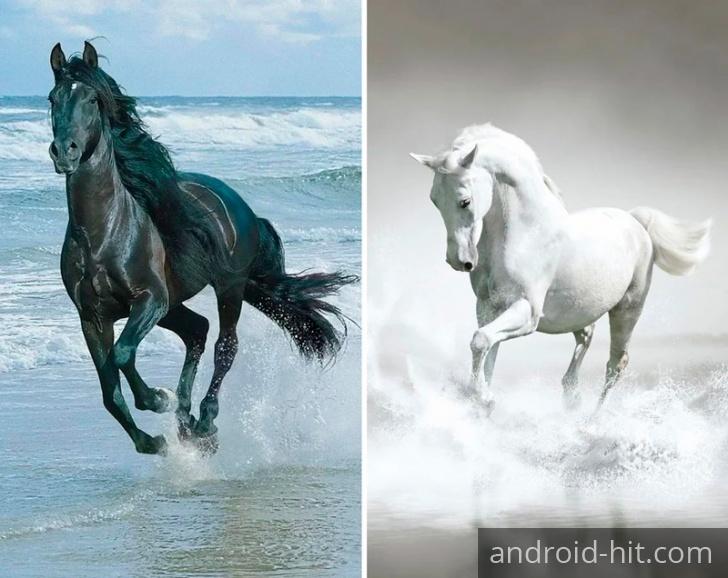Лошади коричневые 2 (95 обоев) » Смотри Красивые Обои, Wallpapers ... | 578x728