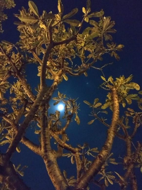 đêm Cuối Năm Chúc Anh Em Năm Mới Nhiều May Mắn Nhiếp ảnh Mi