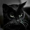 black.cat