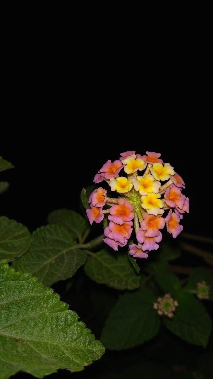 Beauty of flowers photography mi community xiaomi beauty of flowers izmirmasajfo