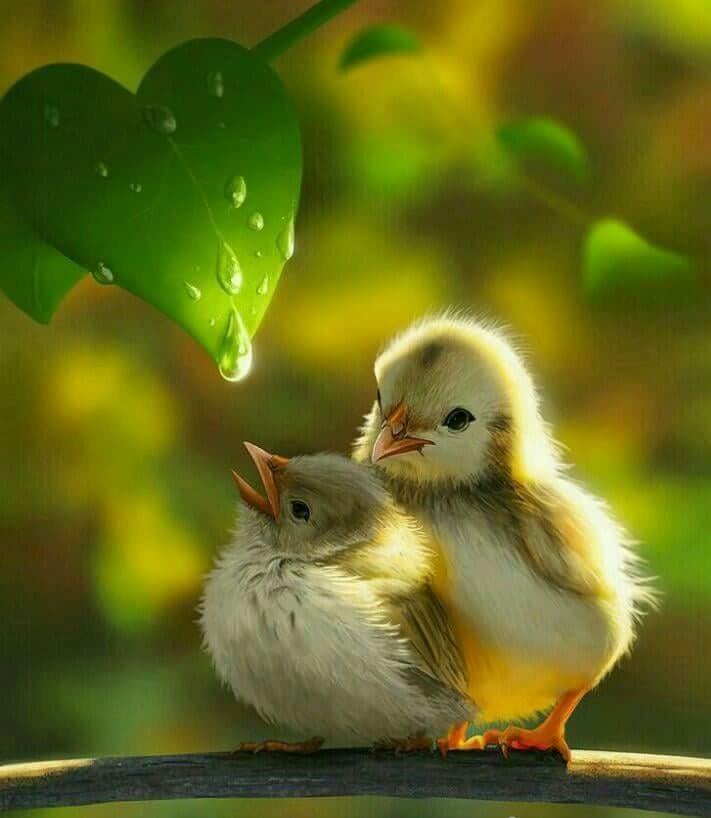 Bird, love, beautiful