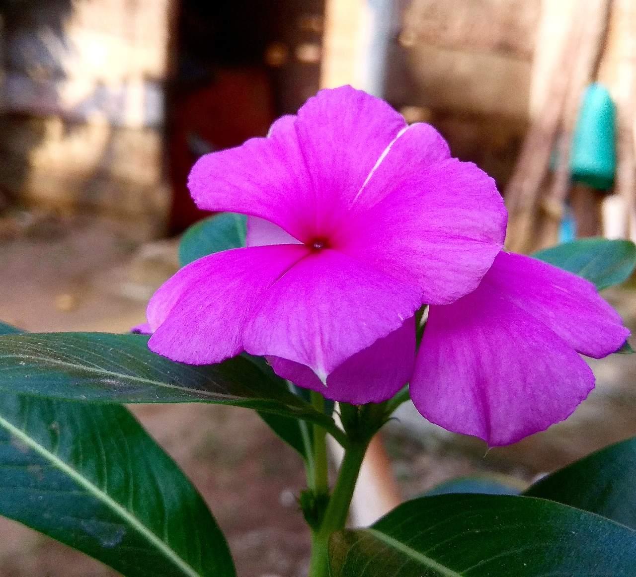 Bunga Bunga Indah Fotografi Mi Community Xiaomi