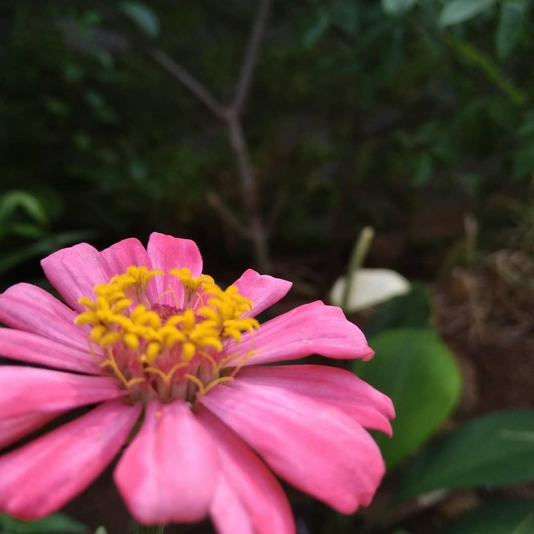 Bunga Mekar Saat Pagi Hari Begitu Indah Nya Bunga Ini