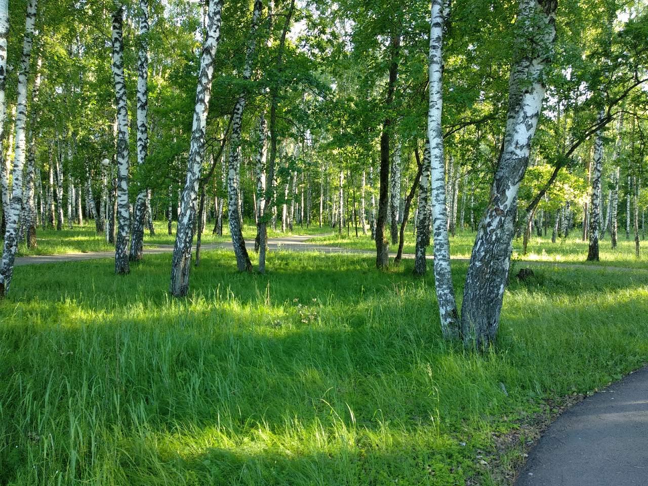 Природа пензенской области в картинках