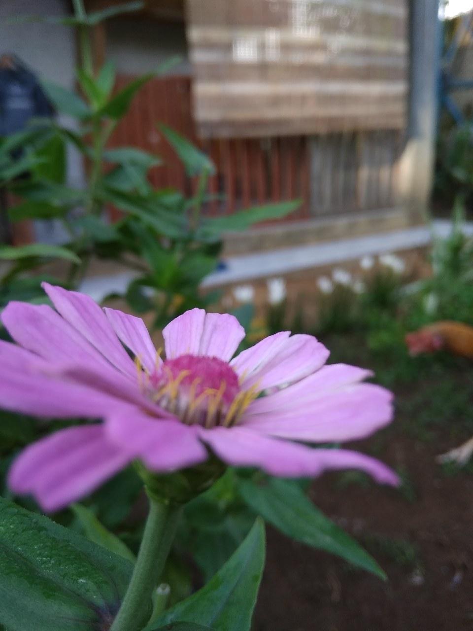 Indah Nya Bunga Ini Mekar Di Pagi Hari Fotografi Mi Community
