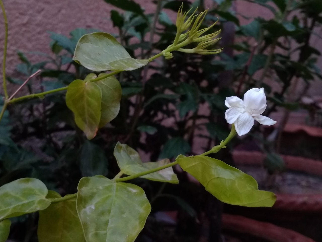 So Beautiful Flowers Photography Mi Community Xiaomi