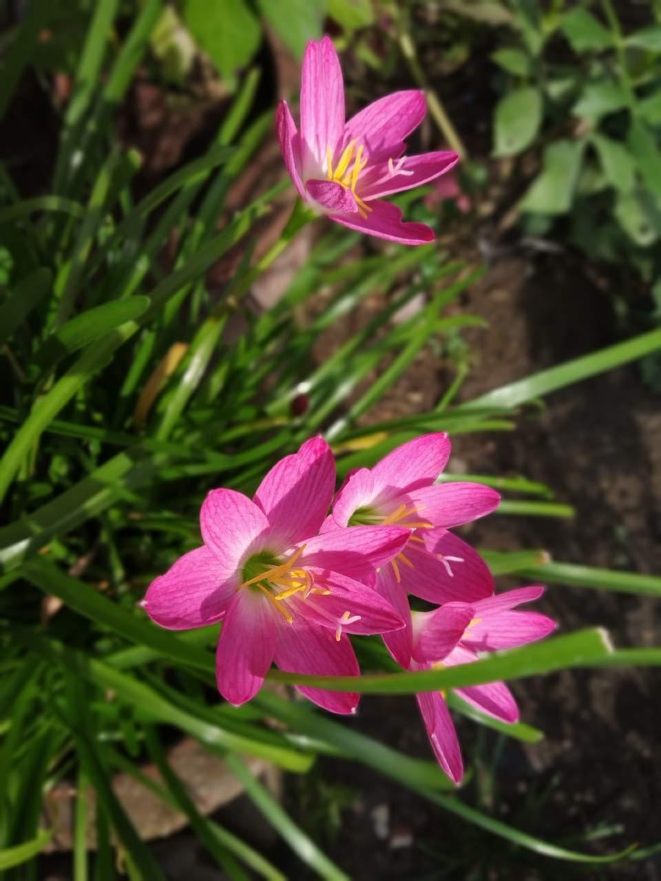 Most Beautiful Flower Photography Mi Community Xiaomi