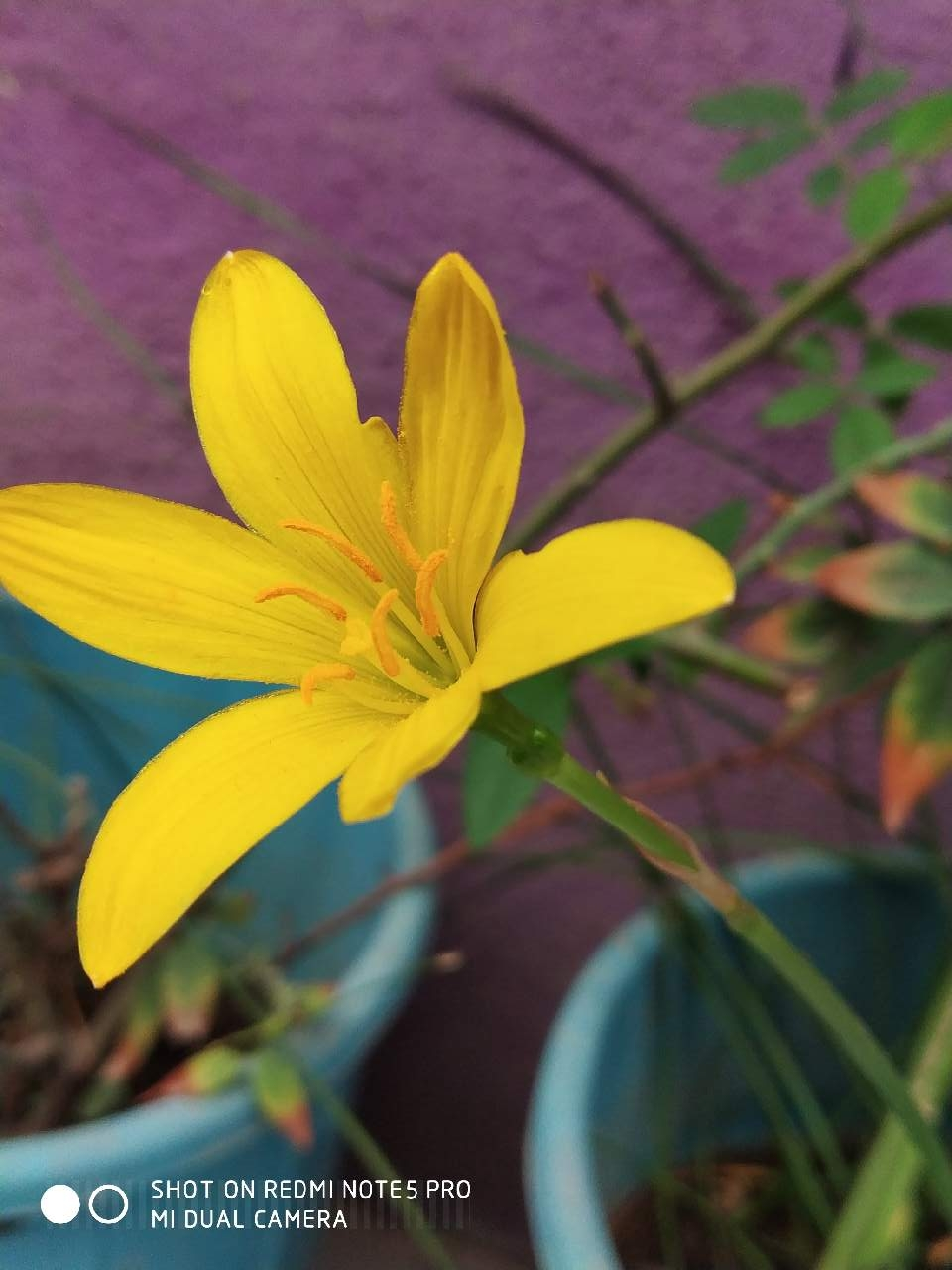 Beautiful yellow flower photography mi community xiaomi beautiful yellow flower izmirmasajfo