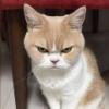 นางแมวสีชมพู