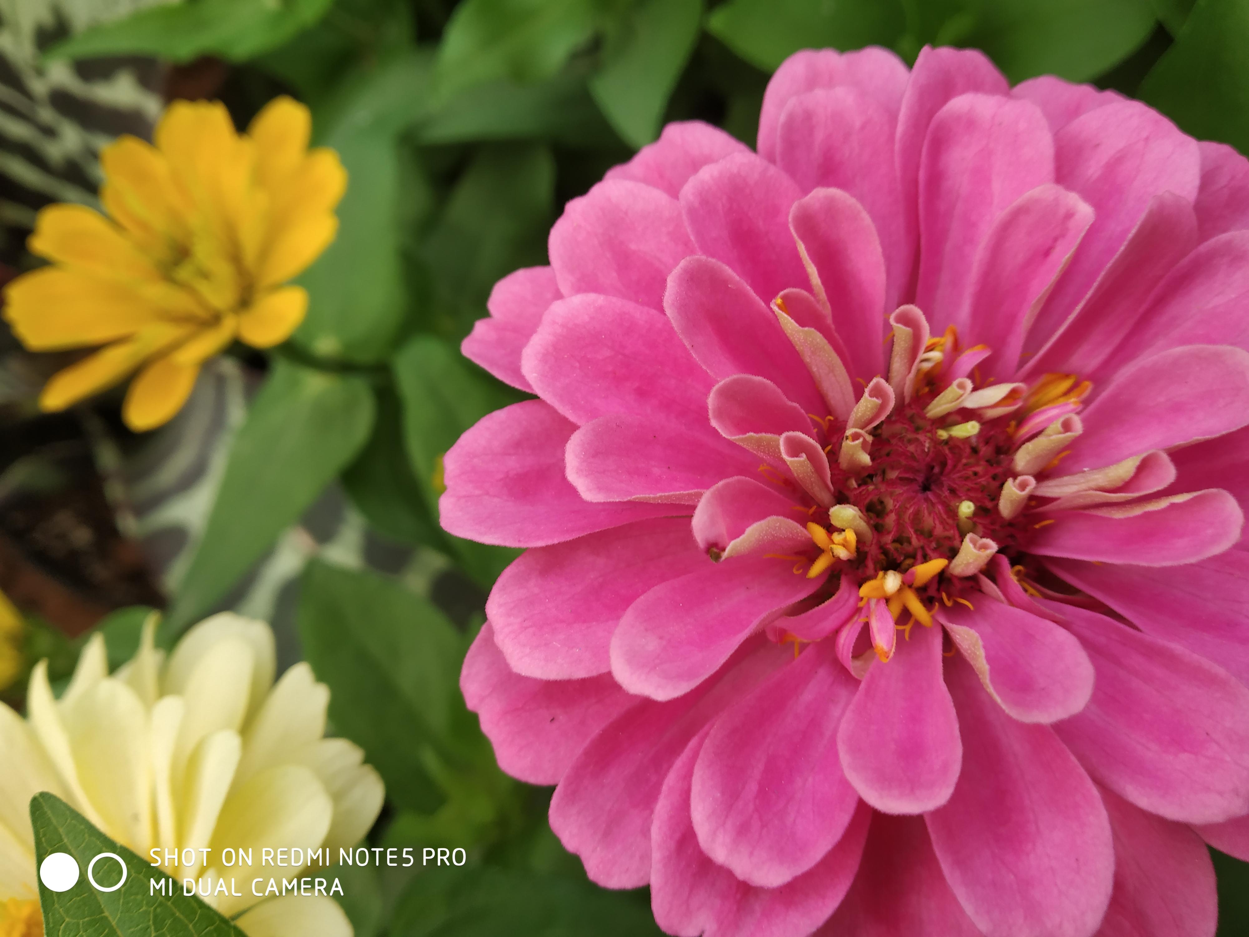 Cute Pink Flowers In This Rainy Season Photography Mi Community