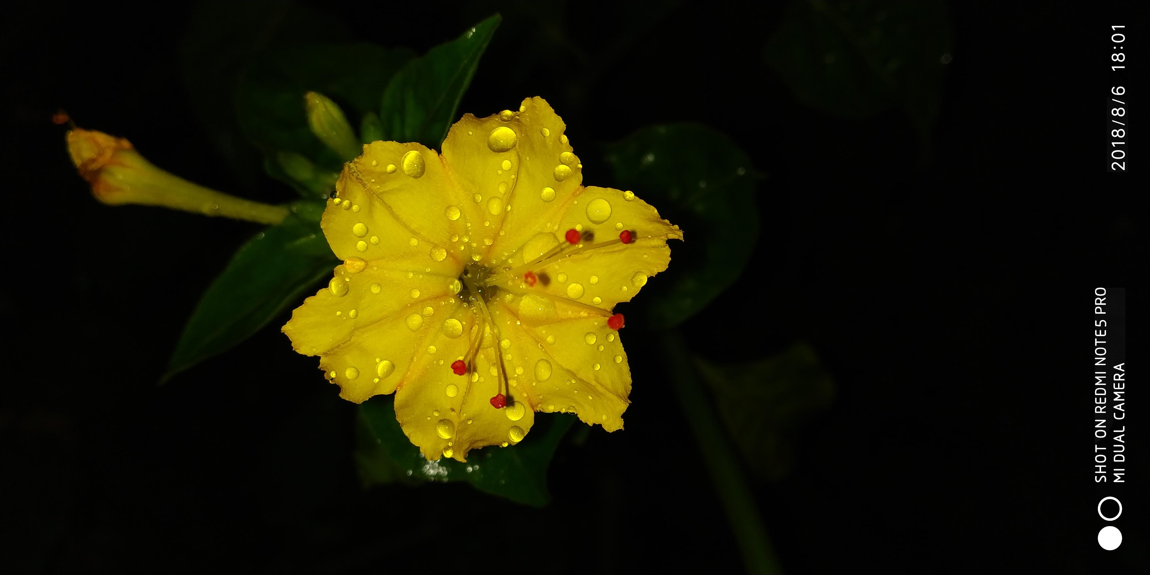 Night beauty of lily flower in rainy season photography mi night beauty of lily flower in rainy season izmirmasajfo