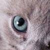 Котик Наркотик