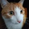 Keanu the cat