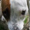 Buchdog