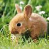 miss rabbit