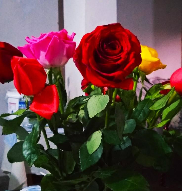 Unas Rosas Hermosas Y Bellas Fotografía Mi Community