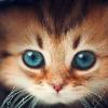AZY_CAT