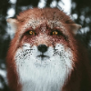 FOXXXIK