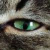 cat19y
