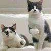Mèo Biến Thái