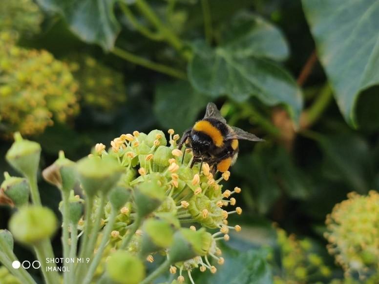 Fotografía macro insectos